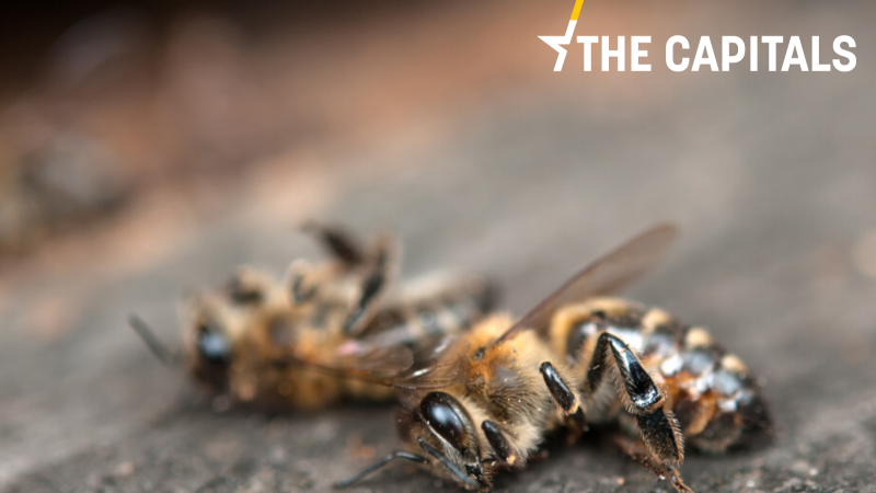 https://en.euractiv.eu/wp-content/uploads/sites/2/2020/06/dead_bees-800x450.png